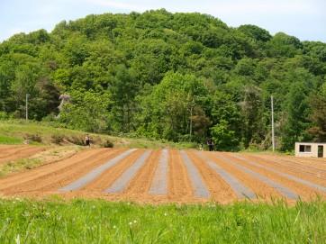 枝豆栽培の記録