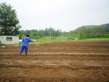 毛豆(枝豆)の園地の土を整える様子